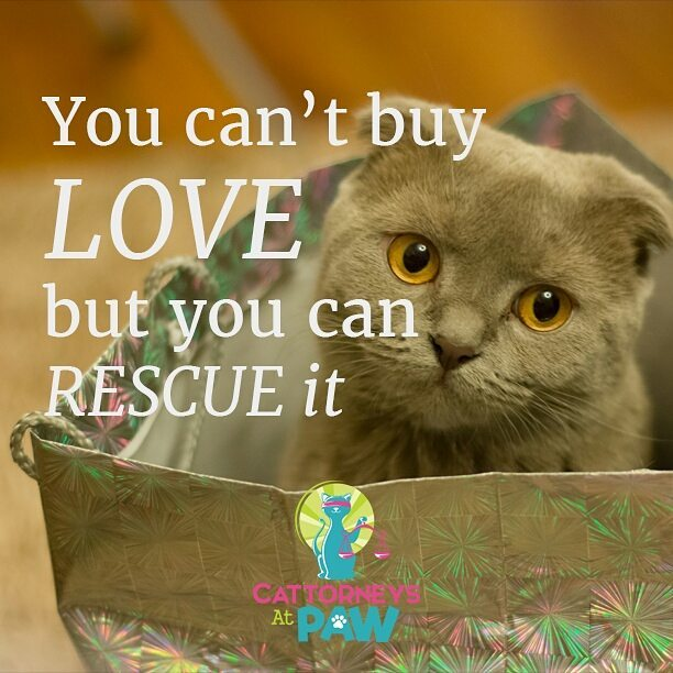 You can't by love but you can rescue it.